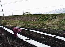 トウモロコシ「ゆめのコーン」阿部農園から直送