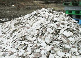 栽培風景ほたての貝殻