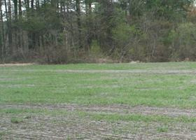 栽培風景麦畑